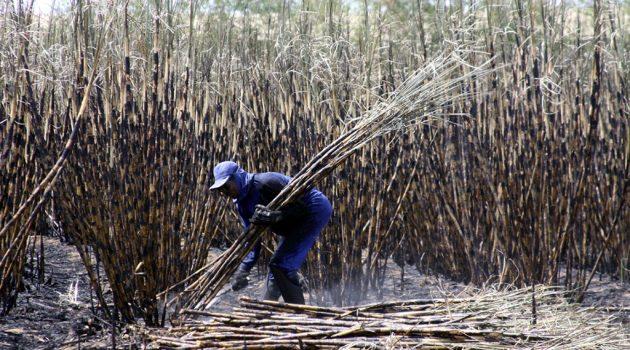 MPT pede mais de R$ 100 mi em indenizações por trabalho escravo em 2017